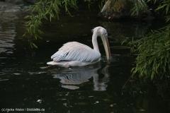 Zoo_Hannover_090916_IMG_8892