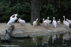 Zoo_Hannover_090916_IMG_8900