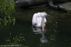 Zoo_Hannover_090916_IMG_8911