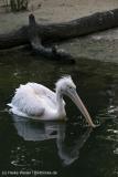 Zoo_Hannover_090916_IMG_8913