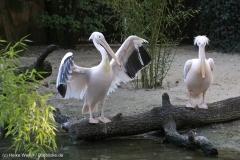 Zoo_Hannover_090916_IMG_8950
