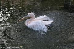 Zoo_Hannover_090916_IMG_8981