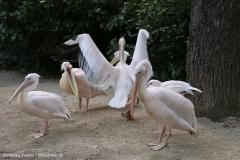 Zoo_Hannover_090916_IMG_9009