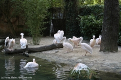 Zoo_Hannover_090916_IMG_9026
