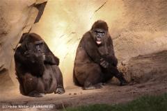 Zoo-Hannover-091009IMG_6563