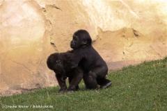 Zoo-Hannover-091009IMG_6577