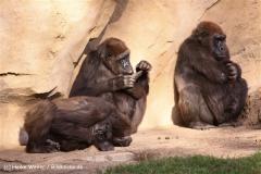 Zoo-Hannover-091009IMG_6629