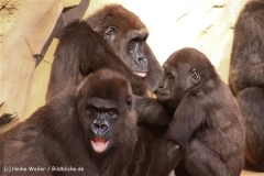 Zoo-Hannover-091009IMG_6635