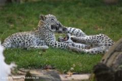 Zoo-Hannover-091009IMG_6738