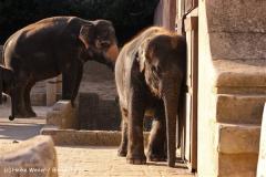 Zoo-Hannover-091009IMG_7096