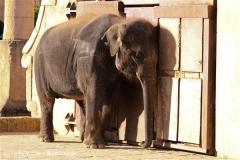Zoo-Hannover-091009IMG_7102