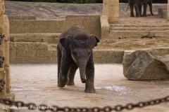 Zoo-Hannover-091009IMG_7109