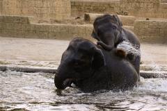 Zoo-Hannover-091009IMG_7240