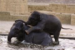 Zoo-Hannover-091009IMG_7245