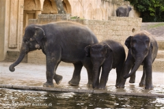 Zoo-Hannover-091009IMG_7353
