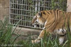 Zoo-Hannover-091009IMG_7512