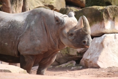 Zoo_Hannover_100415_IMG_2903