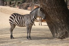 Zoo_Hannover_100415_IMG_2915