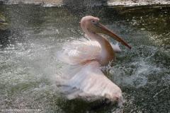 Zoo_Hannover_100415_IMG_2928