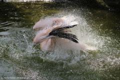 Zoo_Hannover_100415_IMG_2938