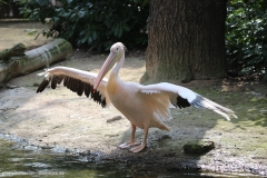 Zoo_Hannover_100415_IMG_2974