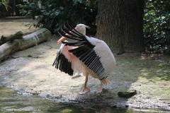 Zoo_Hannover_100415_IMG_2979