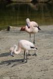 Zoo_Hannover_100415_IMG_2993