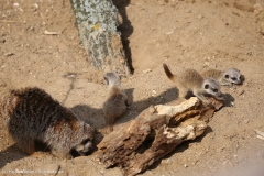 Zoo_Hannover_100415_IMG_3002