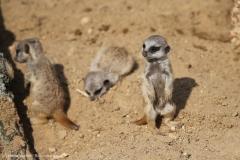 Zoo_Hannover_100415_IMG_3007