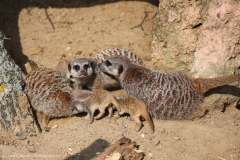 Zoo_Hannover_100415_IMG_3011
