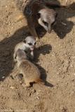 Zoo_Hannover_100415_IMG_3016