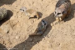 Zoo_Hannover_100415_IMG_3020