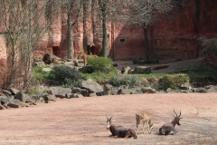 Zoo_Hannover_100415_IMG_3033