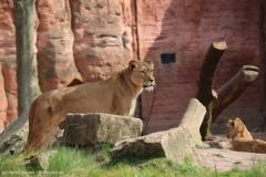Zoo_Hannover_100415_IMG_3039