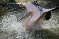 Zoo_Hannover_100415_IMG_2945