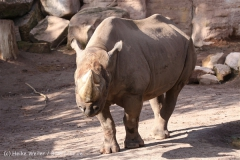 Zoo_Hannover_101014_copy_Heike_Weiler_IMG_7927