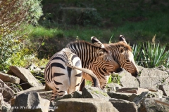 Zoo_Hannover_101014_copy_Heike_Weiler_IMG_7944
