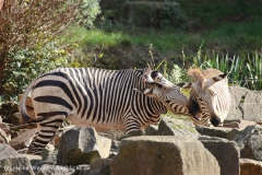 Zoo_Hannover_101014_copy_Heike_Weiler_IMG_7946