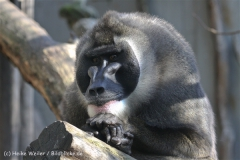 Zoo_Hannover_101014_copy_Heike_Weiler_IMG_7988