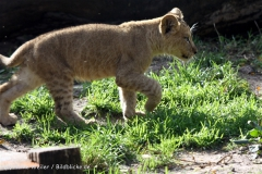 Zoo_Hannover_101014_copy_Heike_Weiler_IMG_8020