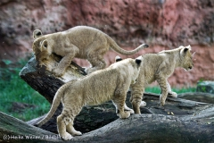 Zoo_Hannover_101014_copy_Heike_Weiler_IMG_8027