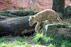 Zoo_Hannover_101014_copy_Heike_Weiler_IMG_8030