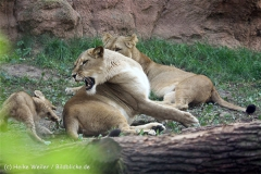 Zoo_Hannover_101014_copy_Heike_Weiler_IMG_8066