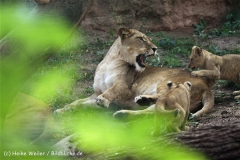 Zoo_Hannover_101014_copy_Heike_Weiler_IMG_8092