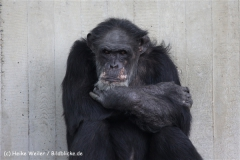 Zoo_Hannover_120412_IMG_6339-2