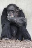 Zoo_Hannover_120412_IMG_6340