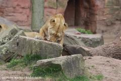 Zoo_Hannover_120412_IMG_6351