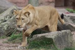 Zoo_Hannover_120412_IMG_6354