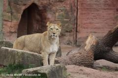 Zoo_Hannover_120412_IMG_6364