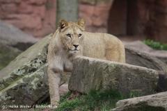 Zoo_Hannover_120412_IMG_6366
